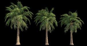 4k有风棕榈英尺长度建筑形象化的与保险开关面具 皇族释放例证