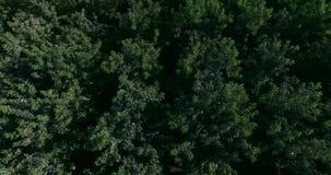 4K森林的顶视图 股票视频