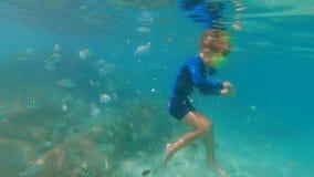 4k潜航在面具和呼吸管的一个小男孩的慢动作射击在美丽的海喂养热带鱼 影视素材