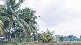 4K热带风景,巴厘岛,印度尼西亚时间间隔  股票视频
