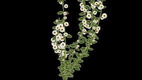 4k生长春天雏菊花分支植被植物 皇族释放例证