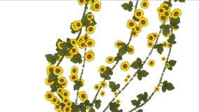 4k生长春天雏菊迎春花花分支植被植物 皇族释放例证