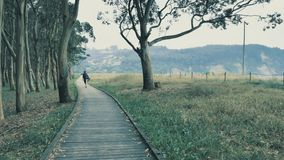 4k相当走在自然木指挥台的女孩在有青山的美丽的自然树丛里在 股票录像