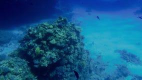 4k美丽的ccolorful珊瑚礁英尺长度在红海 令人惊讶的水下的生活 股票录像