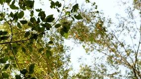 4k英尺长度 在蓝天的背景的绿色叶子 影视素材