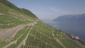 4K葡萄园未分级的空中英尺长度在Terrasses de拉沃葡萄园梯田在洛桑附近在瑞士- UHD调遣 股票视频