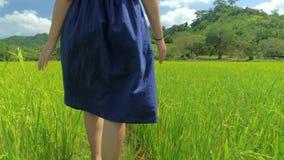 4K蓝色礼服的少女走沿在El Nido,菲律宾的米领域的steadicam后面观点的 股票视频