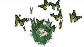 4k蝴蝶豪华的花瓣留给庄稼灌木灌木植物草生长 皇族释放例证