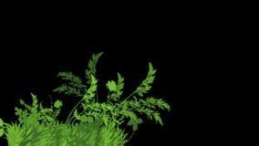 4k豪华的花留给庄稼灌木灌木植物草生长 向量例证