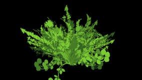 4k豪华的花留给庄稼灌木灌木植物草生长 皇族释放例证
