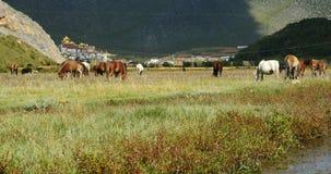 4k马在河,在山的云彩许多辗压,很远寺庙吃草 影视素材