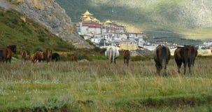 4k马在河,在山的云彩许多辗压,很远寺庙吃草 股票视频