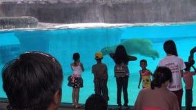 4K,获得不同种族的孩子乐趣看在吃的北极熊在水面下 股票视频