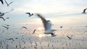 4K πολλοί πετώντας seagull που πιάνει τα τρόφιμα στον αέρα φιλμ μικρού μήκους