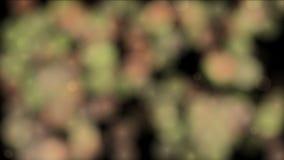 4k αφηρημένο υπόβαθρο θορύβου σημείων υδρονέφωσης ομίχλης πυροτεχνημάτων καπνού, βακτηρίδια σπορίων μικροβίων ελεύθερη απεικόνιση δικαιώματος