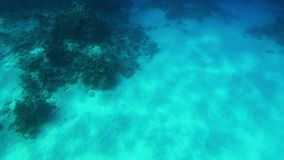 4k βίντεο που γίνεται από το υποβρύχιο των όμορφων υποβρύχιων τοπίων Κοραλλιογενής ύφαλος και κολυμπώντας τροπικά ψάρια απόθεμα βίντεο
