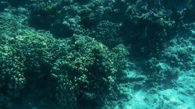 4k βίντεο που γίνεται από το υποβρύχιο των όμορφων υποβρύχιων τοπίων Κοραλλιογενής ύφαλος και κολυμπώντας τροπικά ψάρια φιλμ μικρού μήκους