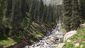 4K βίντεο του γρήγορου ρεύματος στο δέντρο δασικό Κιργιστάν έλατου βουνών απόθεμα βίντεο