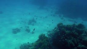 4k βίντεο των όμορφων κοραλλιογενών υφάλων στον πυθμένα της θάλασσας Ζωηρόχρωμα ψάρια που κολυμπούν γύρω απόθεμα βίντεο