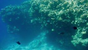 4k βίντεο όμορφο seascape της κοραλλιογενούς υφάλου στη Ερυθρά Θάλασσα Ωκεάνια υποβρύχια ζωή Καταπληκτικό ήρεμο υπόβαθρο απόθεμα βίντεο