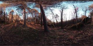 4K 360 εικονική πραγματικότητα VR μιας όμορφης σκηνής βουνών στο χρόνο φθινοπώρου Άγρια σιβηρικά βουνά απόθεμα βίντεο