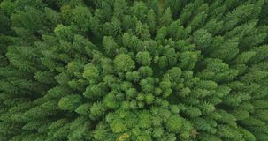 4k εναέρια άποψη του κομψού δάσους δέντρων στα τέλη του καλοκαιριού - περιβάλλον εννοιολογικό απόθεμα βίντεο