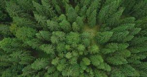 4k εναέρια άποψη του κομψού δάσους δέντρων στα τέλη του καλοκαιριού - περιβάλλον εννοιολογικό φιλμ μικρού μήκους