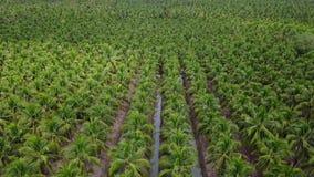 4k εναέριο αγρόκτημα καρύδων γεωργίας άποψης φιλμ μικρού μήκους