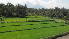 4K εναέριο μήκος σε πόδηα κηφήνων του ηφαιστείου Agung σε μια ηλιόλουστη ημέρα Νησί του Μπαλί απόθεμα βίντεο