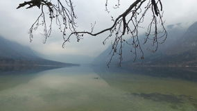 4K Η καταπληκτική λίμνη Bohinj στον ομιχλώδη καιρό μέσω των δέντρων διακλαδίζεται, πανοραμική άποψη Ιουλιανές Άλπεις, εθνικό πάρκ φιλμ μικρού μήκους