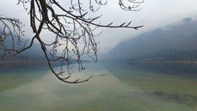 4K Η καταπληκτική λίμνη Bohinj στον ομιχλώδη καιρό μέσω των δέντρων διακλαδίζεται, πανοραμική άποψη Ιουλιανές Άλπεις, εθνικό πάρκ απόθεμα βίντεο