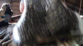4K κατοικίδια ζώα κινηματογραφήσεων σε πρώτο πλάνο που τρώνε το σανό στη σιταποθήκη Αγελάδες βοοειδών που βόσκουν στο αγρόκτημα απόθεμα βίντεο