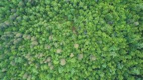 4K κεραία του πετάγματος πέρα από ένα όμορφο πράσινο δάσος σε ένα αγροτικό τοπίο, Βερμόντ, ΗΠΑ απόθεμα βίντεο