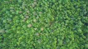 4K κεραία του πετάγματος πέρα από ένα όμορφο πράσινο δάσος σε ένα αγροτικό τοπίο, Βερμόντ, ΗΠΑ φιλμ μικρού μήκους