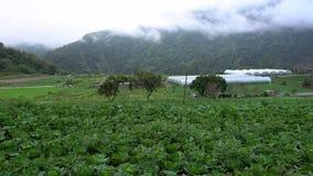 4K, κινεζική άποψη τοπίων τομέων των πρόσφατα αυξανόμενων λάχανων E φιλμ μικρού μήκους