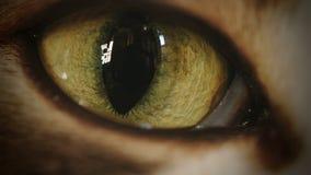 4K μάτι γατών που κινεί και που προσέχει Timelapse φιλμ μικρού μήκους