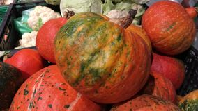 4k μήκος σε πόδηα διαφορετικές μεγέθους πορτοκαλιές κολοκύθες στην αγορά Συγκομιδή φθινοπώρου ή πτώσης φιλμ μικρού μήκους