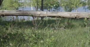 4K - μακροχρόνιο κούτσουρο κοντά στη λίμνη απόθεμα βίντεο