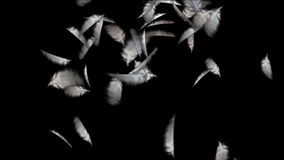 4k μειωμένο φτερό πουλιών φιλμ μικρού μήκους