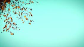 4K Ο κλάδος με το φθινόπωρο αφήνει τις κινήσεις αργά, τα χτυπήματα αέρα απόθεμα βίντεο