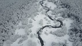 4K Πτήση επάνω από τον άγριο άνεμος ποταμό στο παγωμένο δάσος στον ομιχλώδη καιρό Εναέρια πανοραμική άποψη της όμορφης χειμερινής φιλμ μικρού μήκους