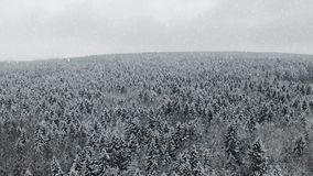 4K Πτήση επάνω από το χειμερινό δάσος στις χιονοπτώσεις στο Βορρά, εναέρια άποψη φιλμ μικρού μήκους