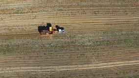 4K Πτήση πέρα από τη συγκομιδή των πατατών με potato-digger το ρυμουλκό, το τρακτέρ και τους ανθρώπους Εναέρια τοπ άποψη φιλμ μικρού μήκους