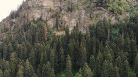 4k - Πτήση Copter κατά μήκος ενός υψηλού δύσκολου βουνού με τα κωνοφόρα δέντρα απόθεμα βίντεο
