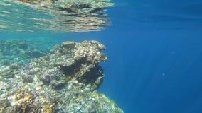 4k σε αργή κίνηση - καταπληκτική εμβύθιση στη θάλασσα με την όμορφη κοραλλιογενή ύφαλο απόθεμα βίντεο