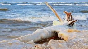 4K Σπασμένο δέντρο στην παραλία με διάφορα παγάκια απόθεμα βίντεο