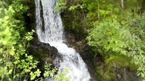 4k σταθερή άποψη σχετικά με το μικρό πετρών απότομων βράχων καταρράκτη ποταμών βουνών δασικό στο πράσινο τοπίο φύσης δέντρων άγρι φιλμ μικρού μήκους