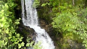 4k σταθερό άγριο τοπίο φύσης που βλασταίνεται στον καταπληκτικό πετρών καταρράκτη ποταμών απότομων βράχων μικρό στο πράσινο δάσος φιλμ μικρού μήκους