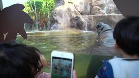 4K τα παιδιά που φαίνονται Pygmy Hippo παίρνουν ένα λουτρό και την κολύμβηση στο νερό στο ζωολογικό κήπο απόθεμα βίντεο