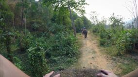 4K τοπ άποψη του ασιατικού ελέφαντα ενώ οι τουρίστες ομαδοποιούν το γύρο μέσω του δάσους απόθεμα βίντεο